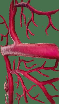 судини, капіляри, артерії