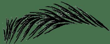 волосковий татуаж Львів, апаратний волосок Львів, реалістичний волосок Львів, мікроблейдинг Львів, перманентний волосок Львів, техніка 6Д Львів